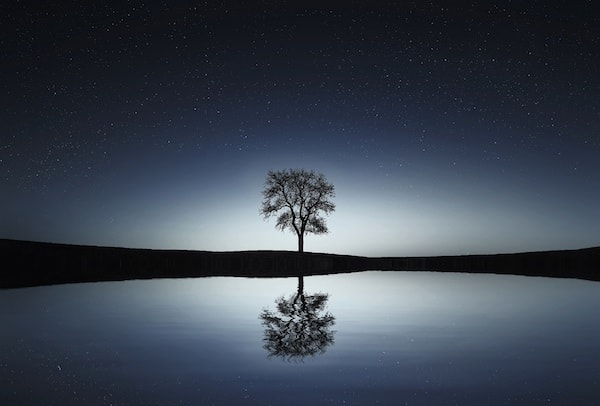single tree reflected on water against night sky